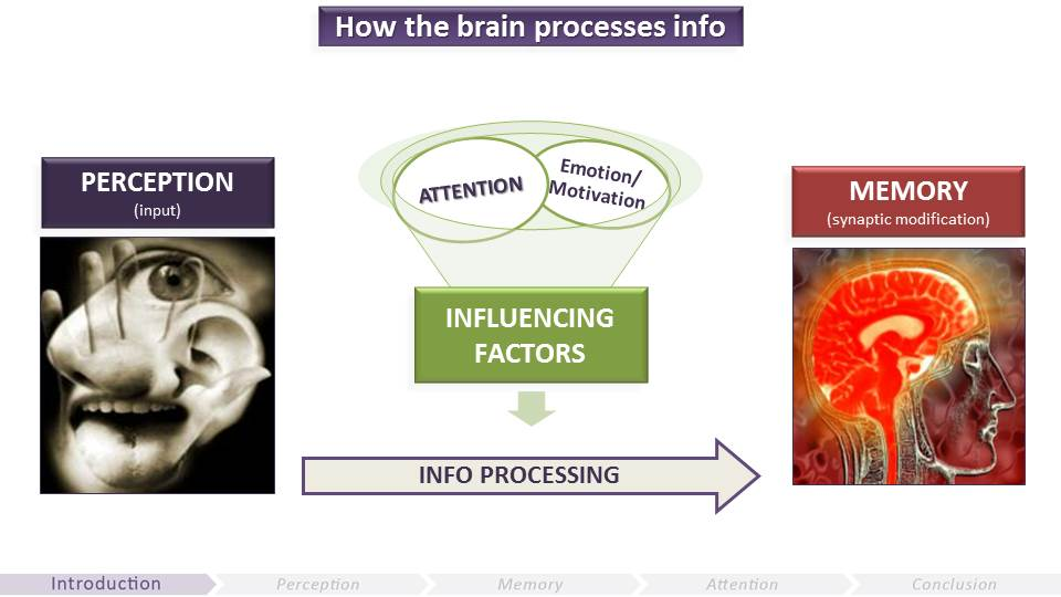 How the Brain Processes Info | Video Game UX